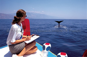 Studying-sperm-whales