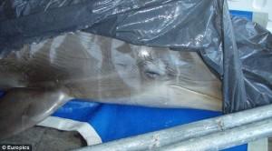 connyland_dead dolphin