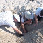 Νέα αγκαλιά για την καρέτα – καρέτα οι ακτές στην Αχαΐα και την Ηλεία (Photos)