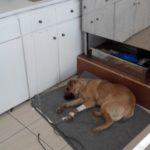 Ηλεία: Αγριος βασανισμός σκύλου από ασυνείδητους (φωτο)