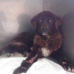 ΗΛΕΙΑ : Αγρότης έσερνε το σκυλί του με το τρακτέρ !